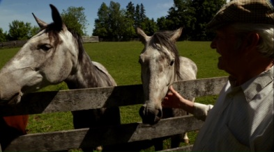 35. Frank Grelo's horse farm and riding school (Caledon) [PT/EN]: https://pchpblog.wordpress.com/2016/07/03/our-story-on-grelo-farms-and-riding-school-aired-on-rtp/